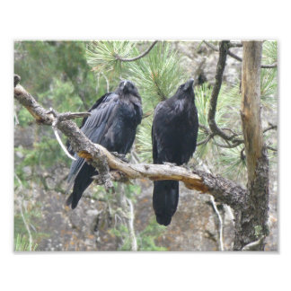 Crows in Colorado Photo Print