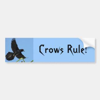 Crows Rule Bumper Sticker