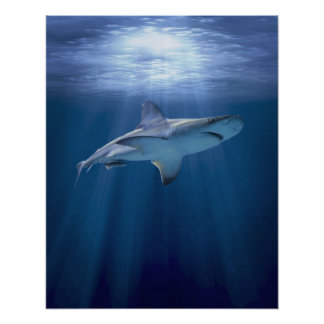 Cruising Shark Poster