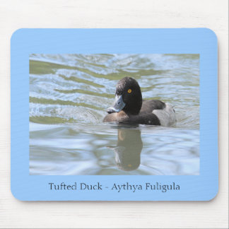 Cruising Tufted Duck Mouse Pad