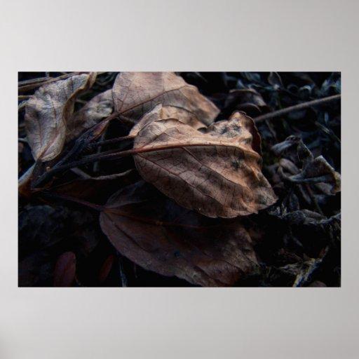 Crunchy Leaf Litter Print