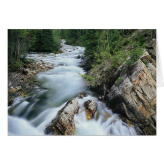 Crystal River, Gunnison National Forest, Card