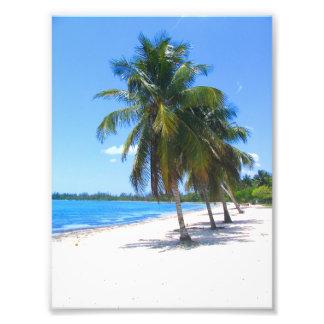 Cuban Palm Trees Photo Print