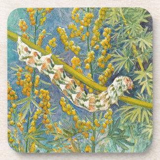 Cucullia Absinthii Caterpillar Coaster