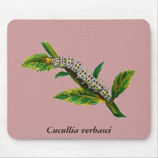 Cucullia verbasci caterpillar mouse pad