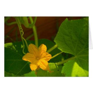 Cucumber Bloom Card