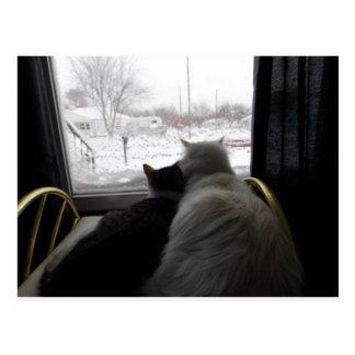 cuddled on snowy day cat card postcard
