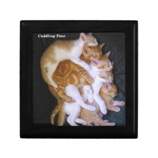 cuddling cats gift box