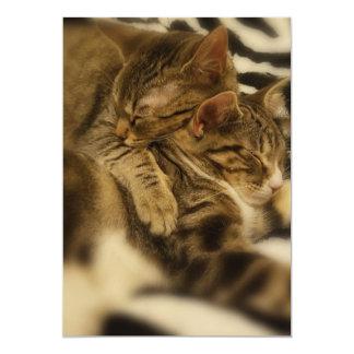 cuddling kittens post card