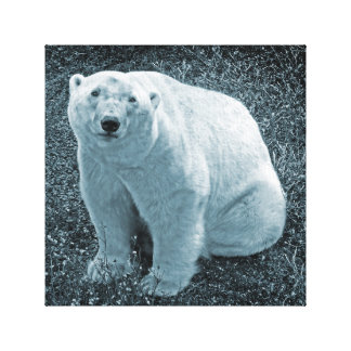 Cuddly Bear Art Canvas Print