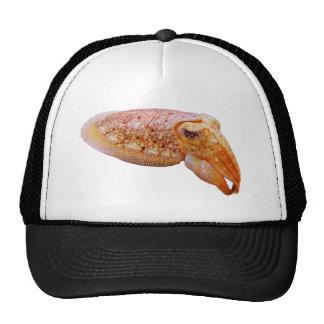 Cuddly Cuttlefish Cap