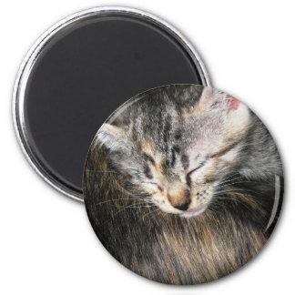 Cuddly Kitten 6 Cm Round Magnet