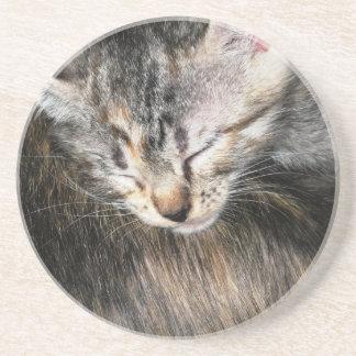 Cuddly Kitten Beverage Coaster