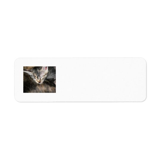 Cuddly Kitten Return Address Label