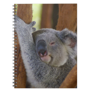Cuddly Koala Bear Notebook