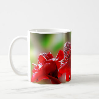 Cup flower of the emperor