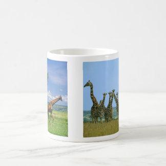 Cup of giraffes herd