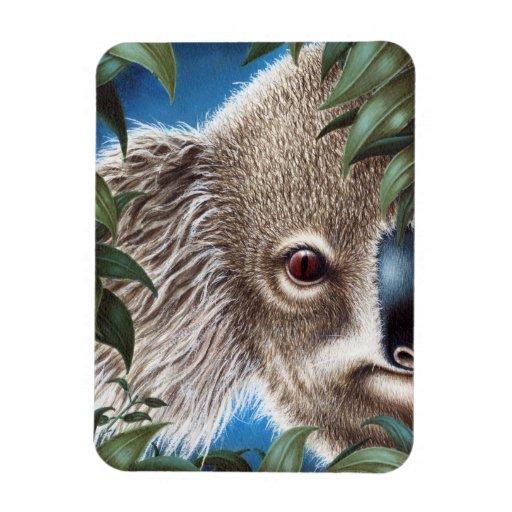 Curios Koala Premium Magnet