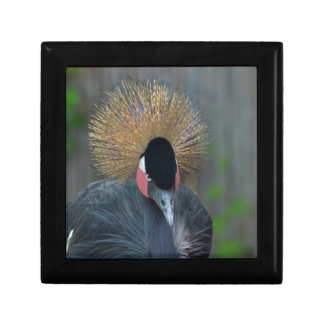 Curious African Crowned Crane Small Square Gift Box