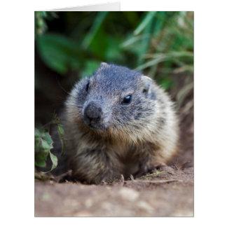 Curious Baby Marmot Card