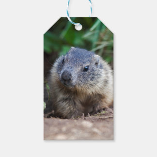 Curious Baby Marmot Gift Tags