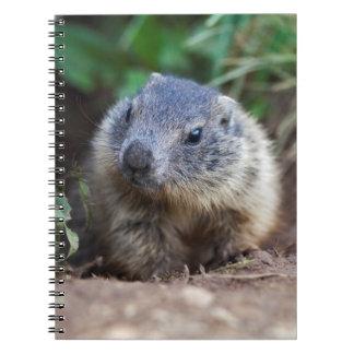 Curious Baby Marmot Notebook