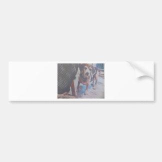 Curious Beagle Bumper Sticker