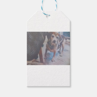 Curious Beagle Gift Tags