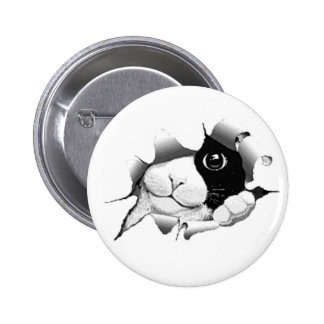 Curious Black and White Kitty Cat Pins