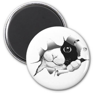 Curious Black and White Kitty Cat Refrigerator Magnets