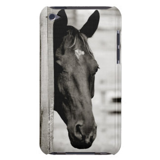 Curious Black Horse Barely There iPod Cases