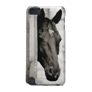 Curious Black Horse iPod Touch 5G Case