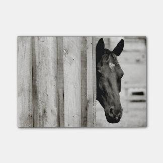 Curious Black Horse Post-it Notes