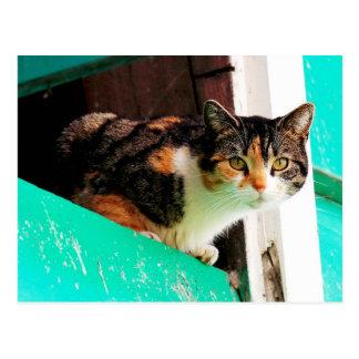 Curious Calico Cat on aquamarine ledge Postcard