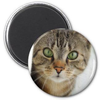 curious cat 6 cm round magnet