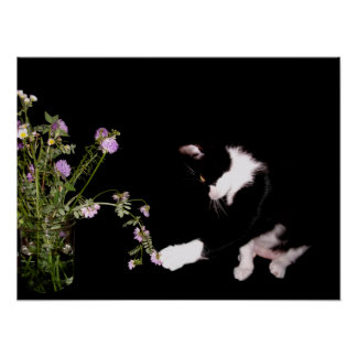 Curious Cat And Wildflowers Posters