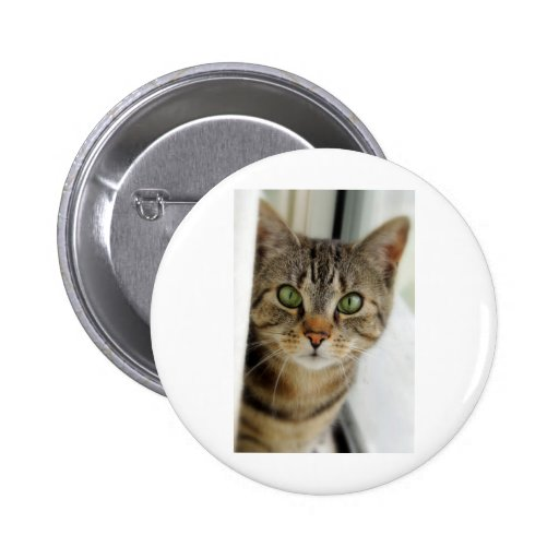 curious cat pins