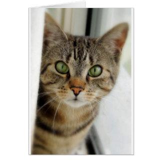 curious cat greeting cards