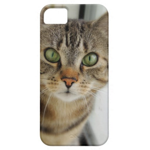 curious cat iPhone 5 cases