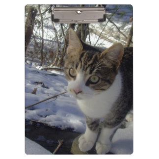 Curious Cat Clipboards