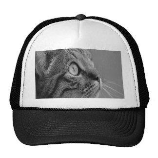 Curious cat trucker hats