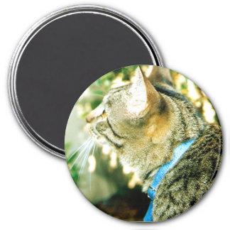Curious Cat magnet