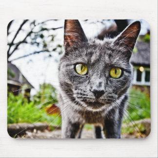 Curious Cat Mouse Pad