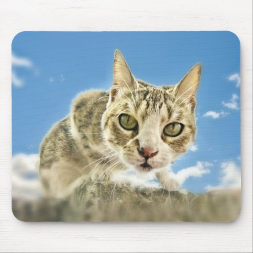 CURIOUS CAT MOUSE PAD