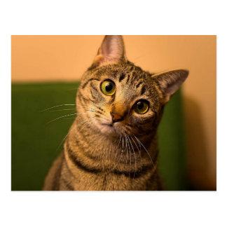 Curious Cat Postcard