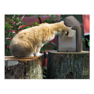 Curious Cat, postcard