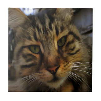 Curious Cat Small Square Tile