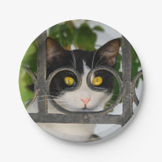 Curious Cat Spectacles Frame Funny Photo - party Paper Plate