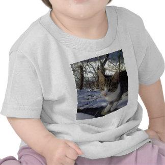 Curious Cat T Shirt