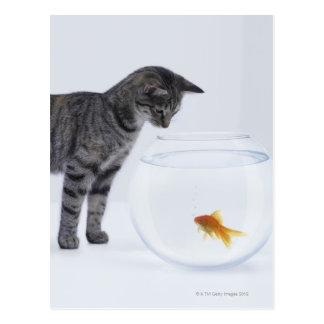 Curious cat watching goldfish in fishbowl postcard